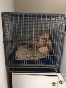 Bungendore-cages